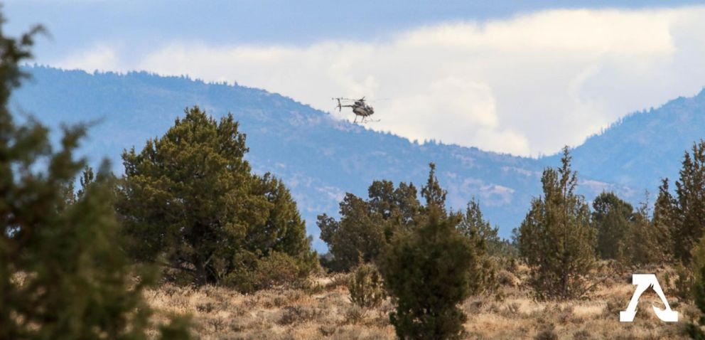 PHOTO: A helicopter contracted by the U.S. Forest Service is seen flying while rounding up wild horses from the Modac National Forest on Wednesday.