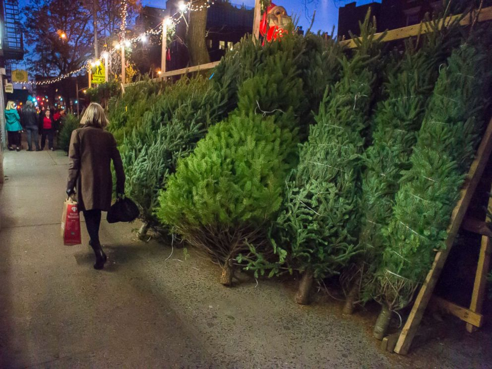 Christmas Trees For Sale.Christmas Tree Shortage May Drive Up The Price Of Your Tree