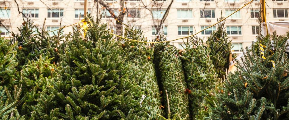 Christmas Tree Shortage May Drive Up The Price Of Your ...