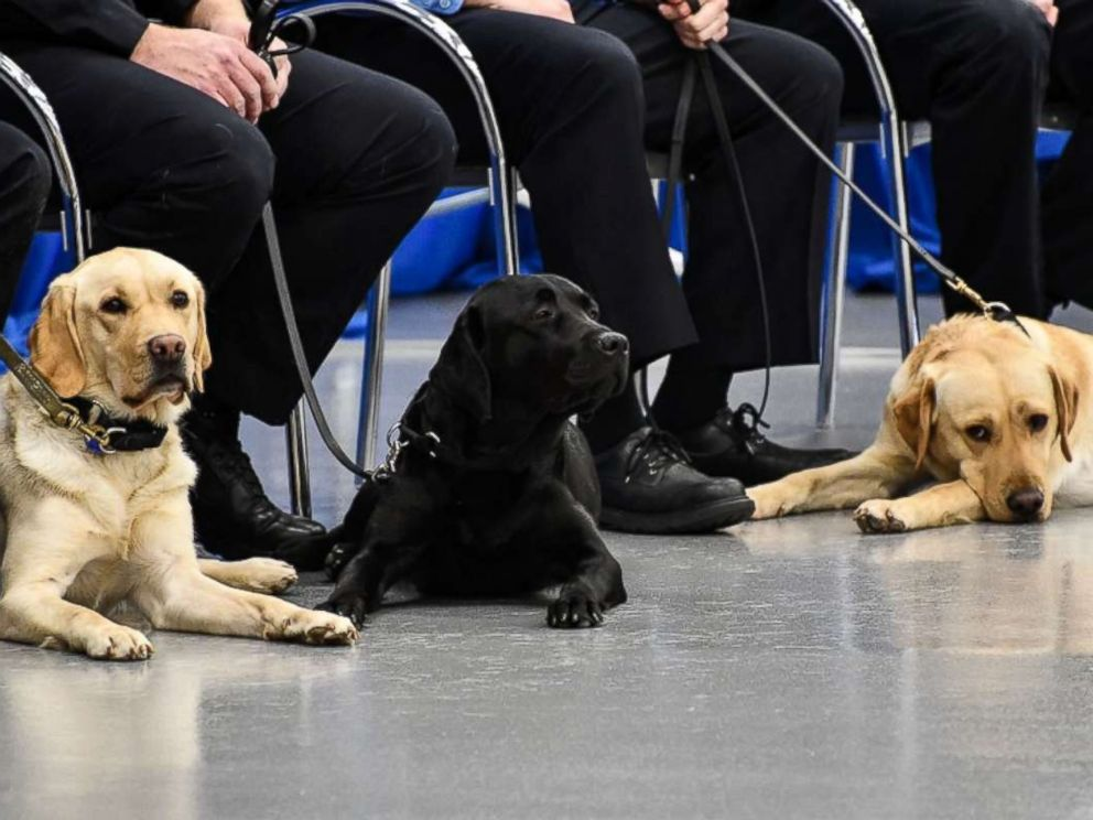 PHOTO: Dogs Freya, Indigo, and Heide graduated from the CIA Fall 2017 Puppy Class, Dec. 8, 2017.
