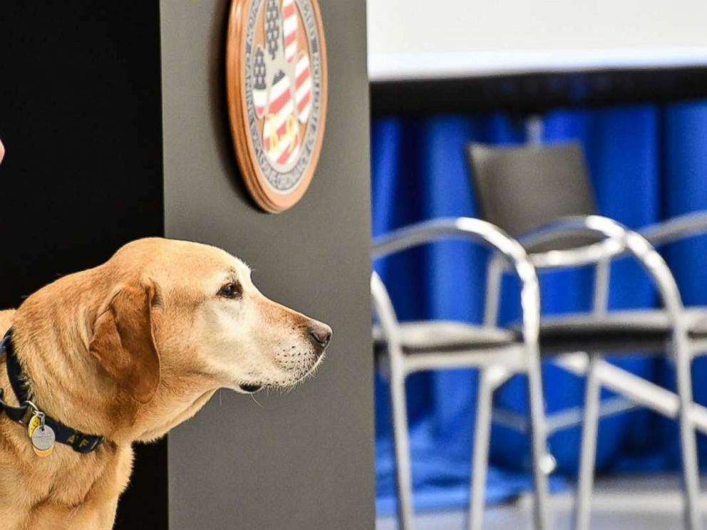 PHOTO: Dog Osmond retired from service in the CIA during the Fall 2017 Puppy Class graduation.