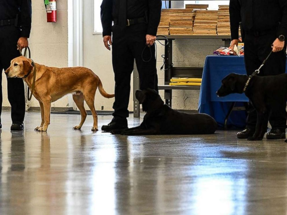PHOTO: CIA K-9s Osmond, Lucy, and Gears wait for the retirement portion of the ceremony, Dec. 8, 2017.