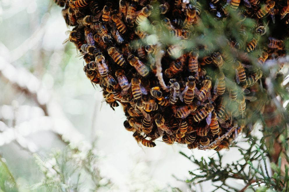 PHOTO: A beehive is pictured in this undated stock photo.