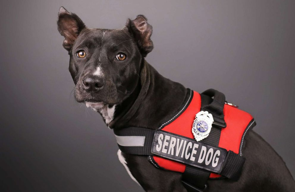PHOTO: Clover is pictured wearing service gear.