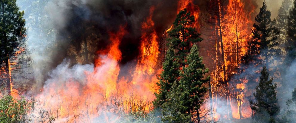 PHOTO: Flames consume trees during a burnout operation that was performed south of County Road 202 near Durango, Colo., June 11, 2018. Firefighters use the technique as a means to control wildfires.