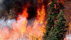Hot, dry conditions help fuel fast-moving wildfires in the