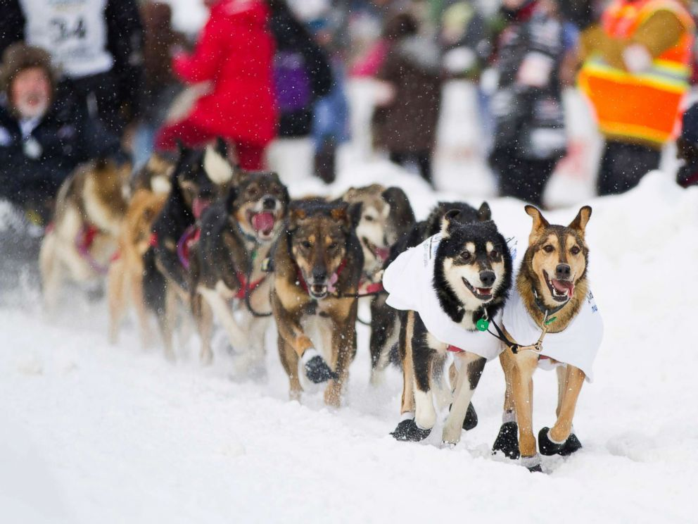 PHOTO: Dallas Seaveys team, from Willow, Alaska, races down the 4th Avenue during the ceremonial start of the 40th Iditarod Trail Sled Dog Race in downtown Anchorage in this March 3, 2012 file photo.