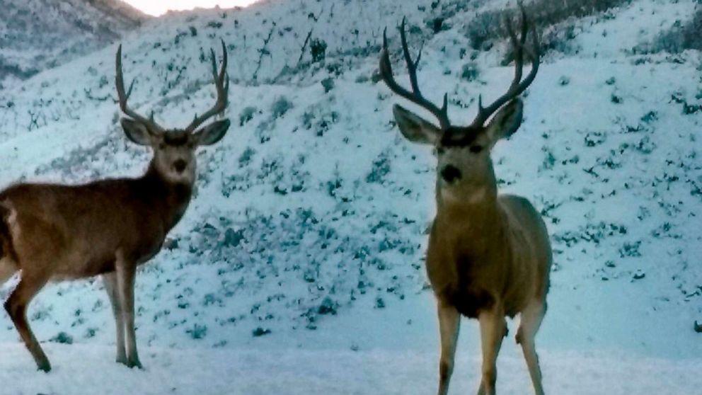 More than 30 dead deer found near landfill in Utah