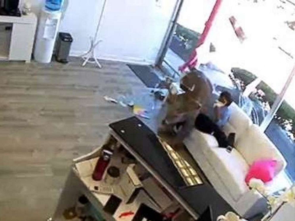 Deer Crashes Through Window Of Long Island Hair Salon