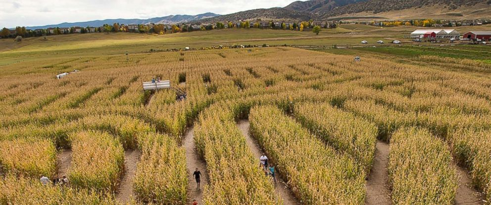 PHOTO: An undated promotional image of a corn maze appeared on the homepage of the Denver Botanic Gardens.