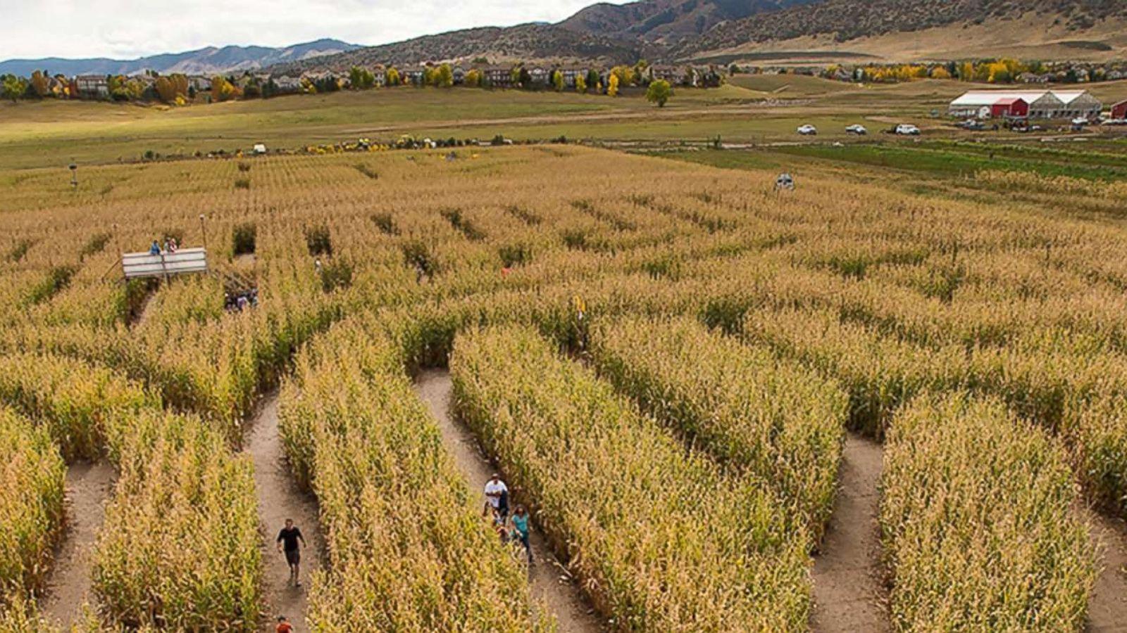 Masked man attacks woman inside Denver corn maze - ABC News