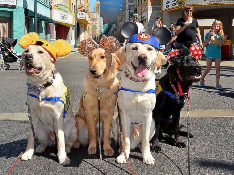 PHOTO: A group of our volunteer puppy raisers recently took their Canine Companions puppies to Disneyland.