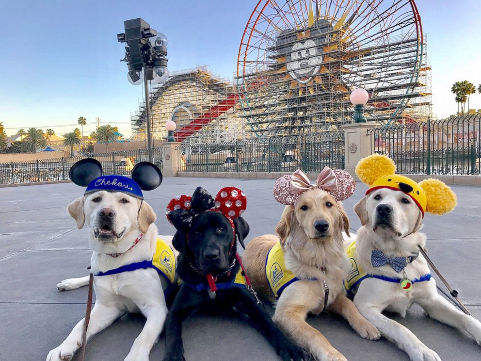 PHOTO: These service dogs in training got to visit Disneyland to be exposed to more sights and smells.
