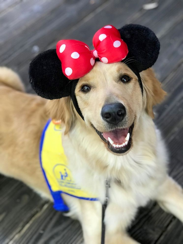PHOTO: Puppies that are being trained to be service dogs took an eventful trip to Disneyland.