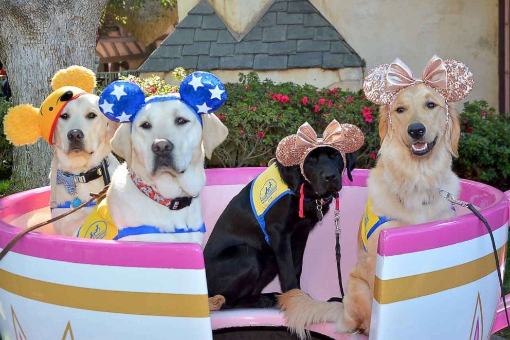 PHOTO: These puppies got to go to Disneyland as part of their service dog training.