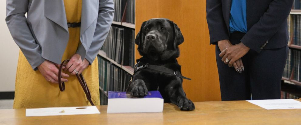PHOTO: Hattys primary handler and victim witness specialist Stephanie Coehlo, left, holds the black lab as Hatty is sworn in by Cook County States Attorney Kimberly Foxx at the George N. Leighton Criminal Courthouse in Chicago, Oct. 29, 2019.