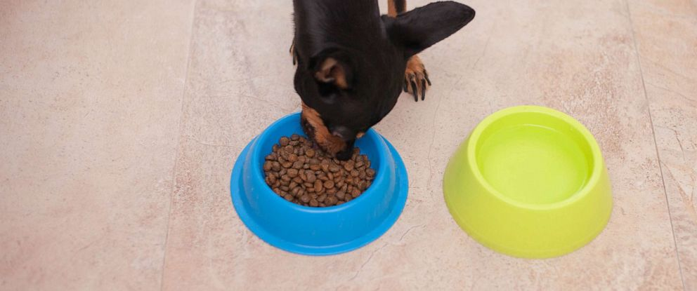 PHOTO: In this undated stock photo, a dog eats dry dog food.