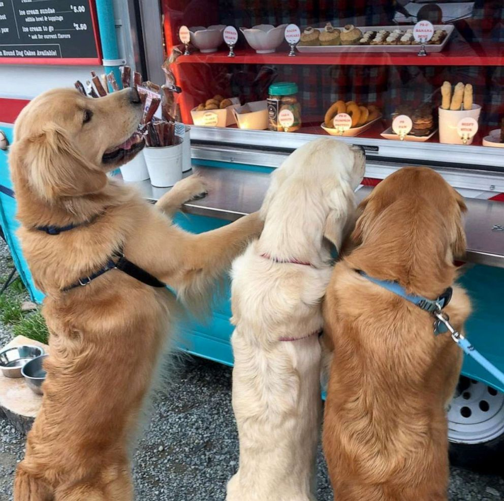 PHOTO: Arwyn Todds two golden retrievers Reida and Rose take begging to a whole other level outside of The Seattle Barkerys treat truck.
