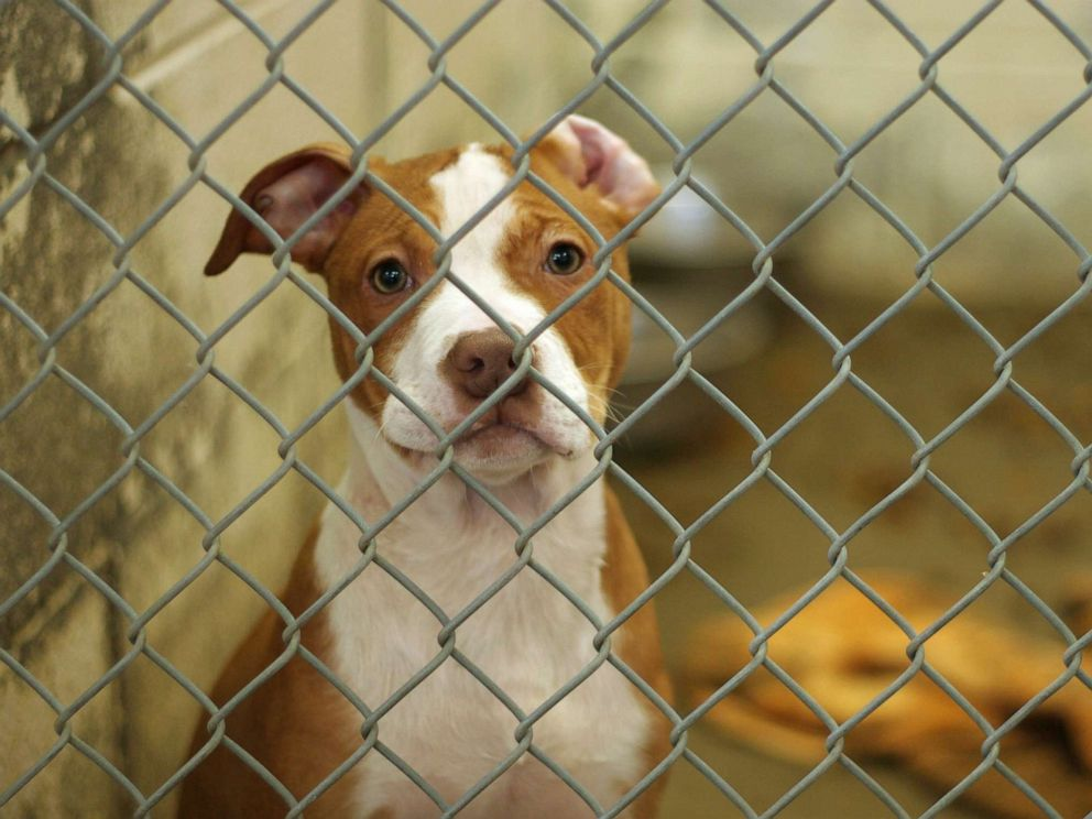 PHOTO: In this undated file photo, a dog eagerly awaits adoption from the animal shelter.