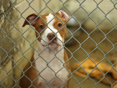 Delaware becomes first no-kill state for animal shelters, activists say