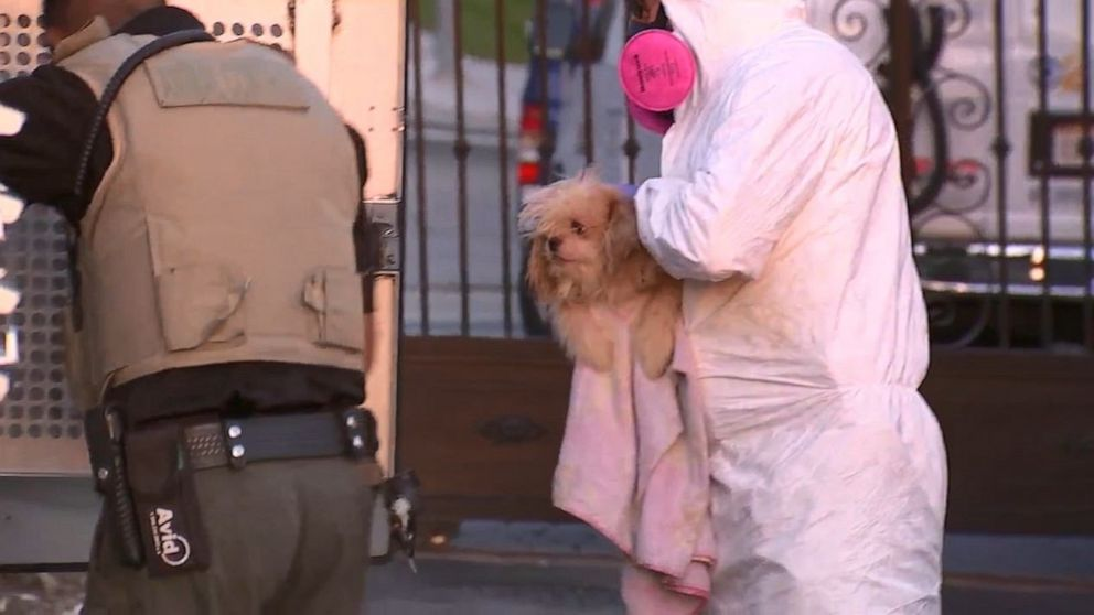 PHOTO: Officials removed 136 dogs from a home in Orange, Calif., on Thursday, May 30, 2019, after receiving an anonymous tip about animal cruelty.