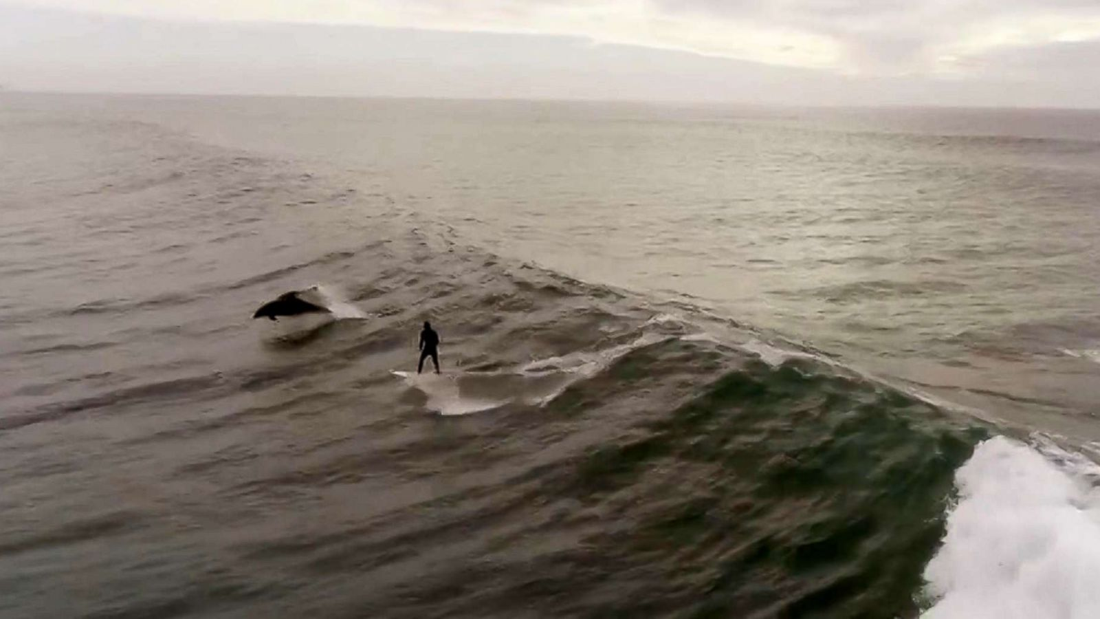 abcnews.go.com - Enjoli Francis - Drone captures man surfing with dolphins