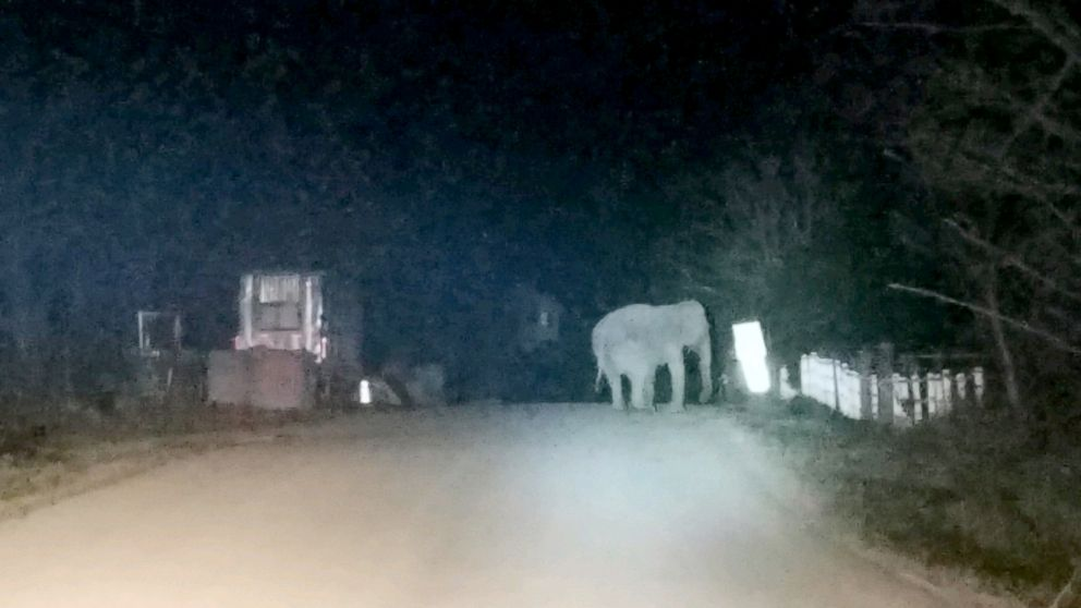 PHOTO: New York State Troopers assisted with the rescue of a 44-year-old Vietnamese elephant who wandered away from her animal sanctuary on Nov. 11, 2018.