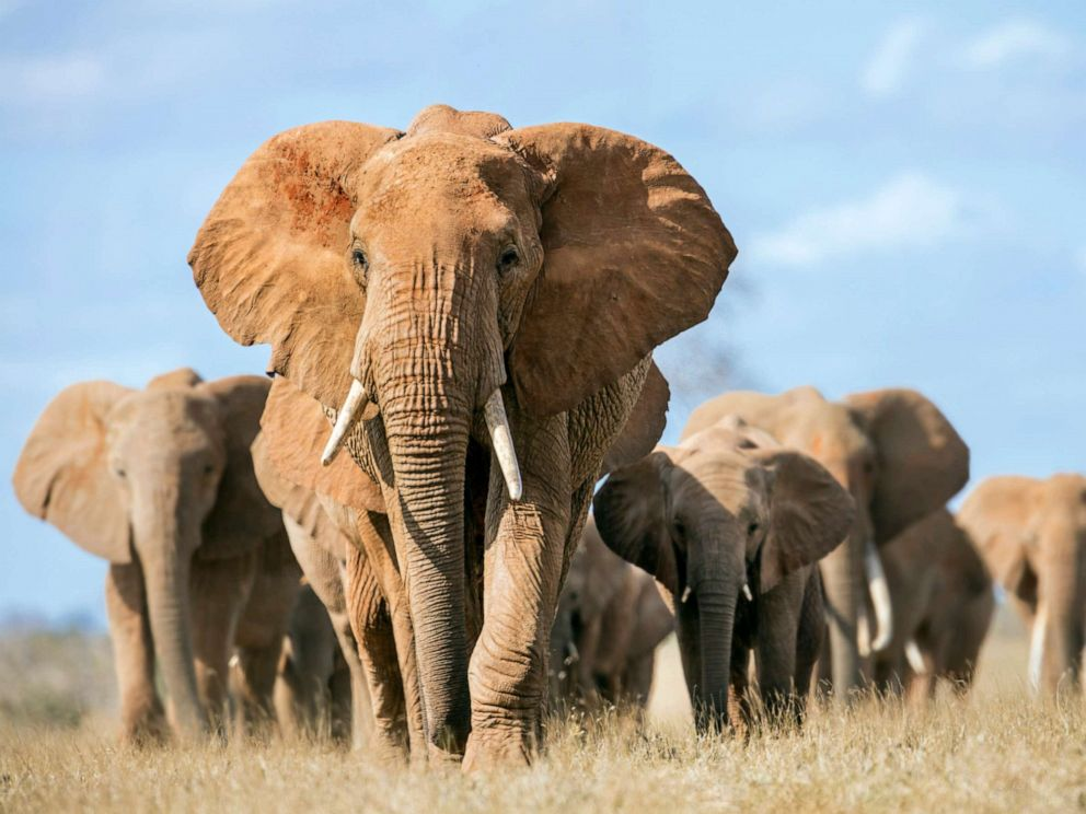 PHOTO: A herd of elephants.