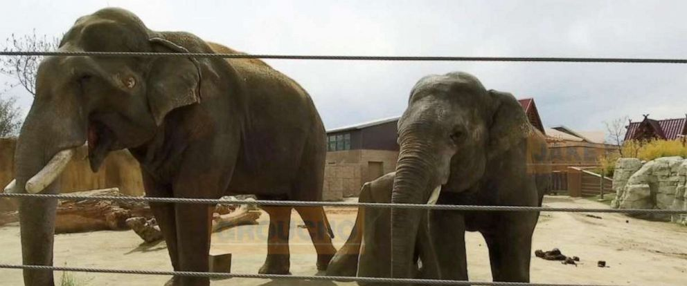 PHOTO: In September, the Denver Zoo welcomed 10-year-old Chuck and 9-year-old Jake.