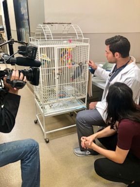 PHOTO: Dr. Evan Antin spoke with Nightline about his show Evan Goes Wild.