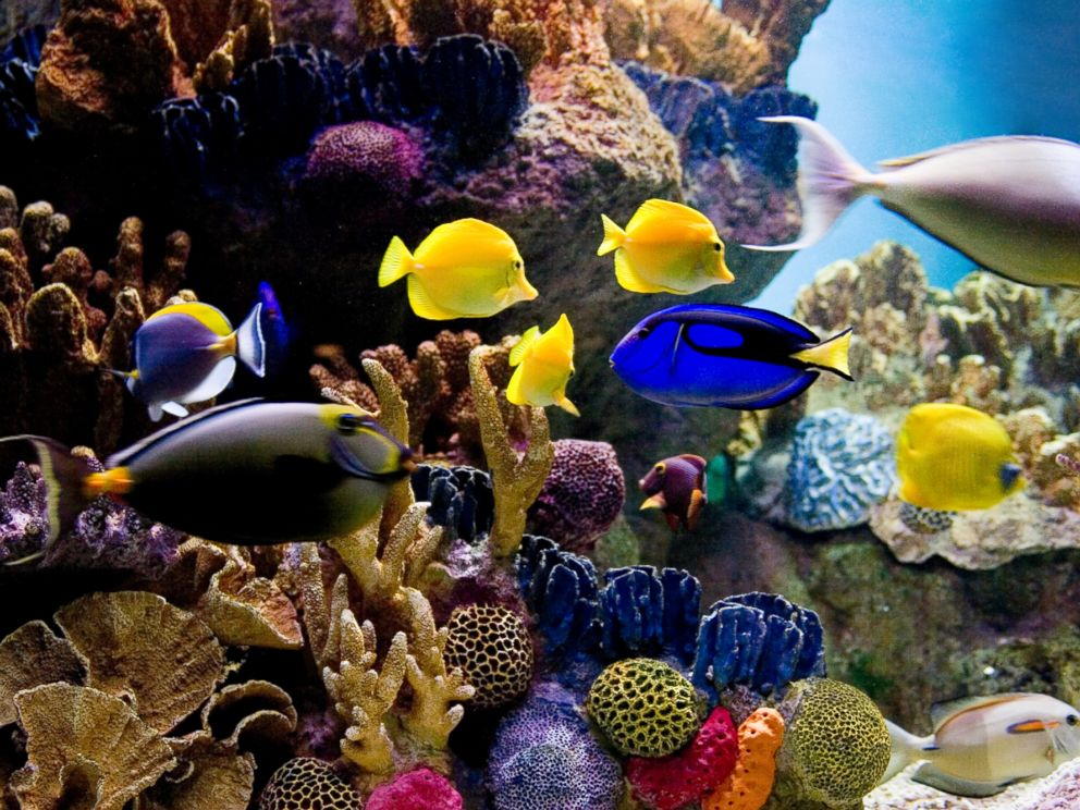 PHOTO: A school of tropical fish in a tank is seen in this stock image.