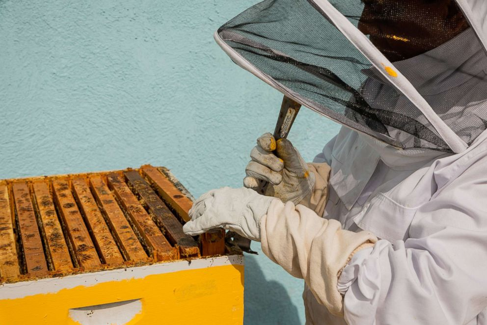 PHOTO: The Fairmont in Washington, D.C., was the first hotel in the city to install honeybee hives on site.