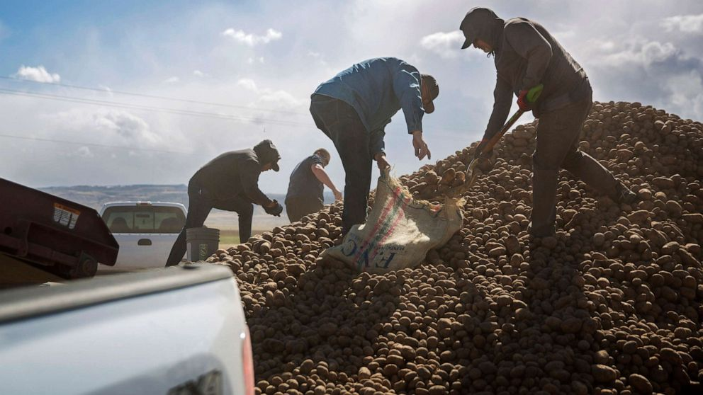 farm losses potatoes ap jc 200501 hpMain 16x9 992.'