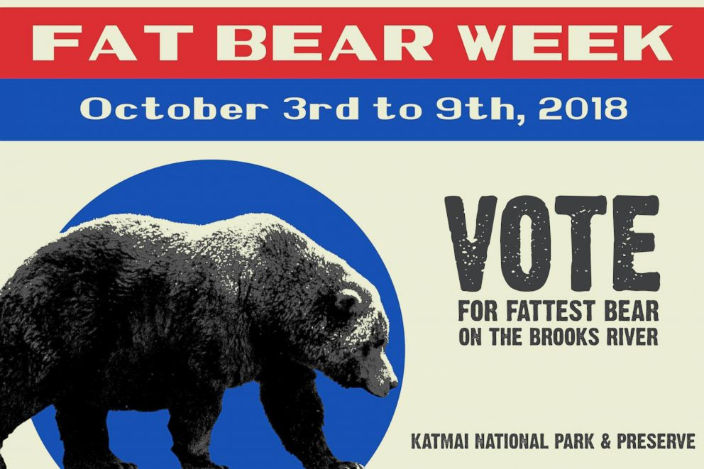 PHOTO: Fat Bear Week
