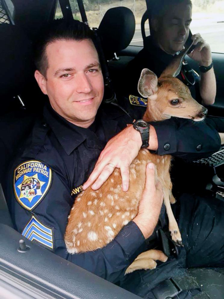 PHOTO: Sergeant David Fawson of the California Highway Patrol holds a month-old fawn that was located by Cal Fire without a mother inside the Carr Fire line near Redding, Calif. Sawson evacuated the deer to safety for care with a wildlife rescue.