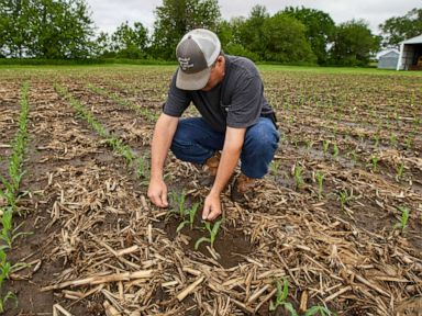 US farmers face historic delays from flooded fields amid Trump tariffs