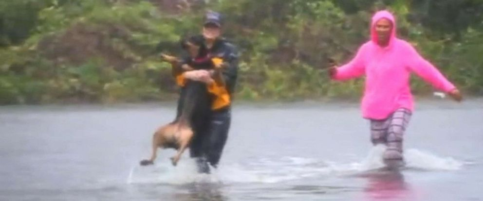 PHOTO: Julie Wilson, a reporter for WTVD, helps save a dog when Hurricane Florence hit New Bern, N.C., Sept. 14, 2018.