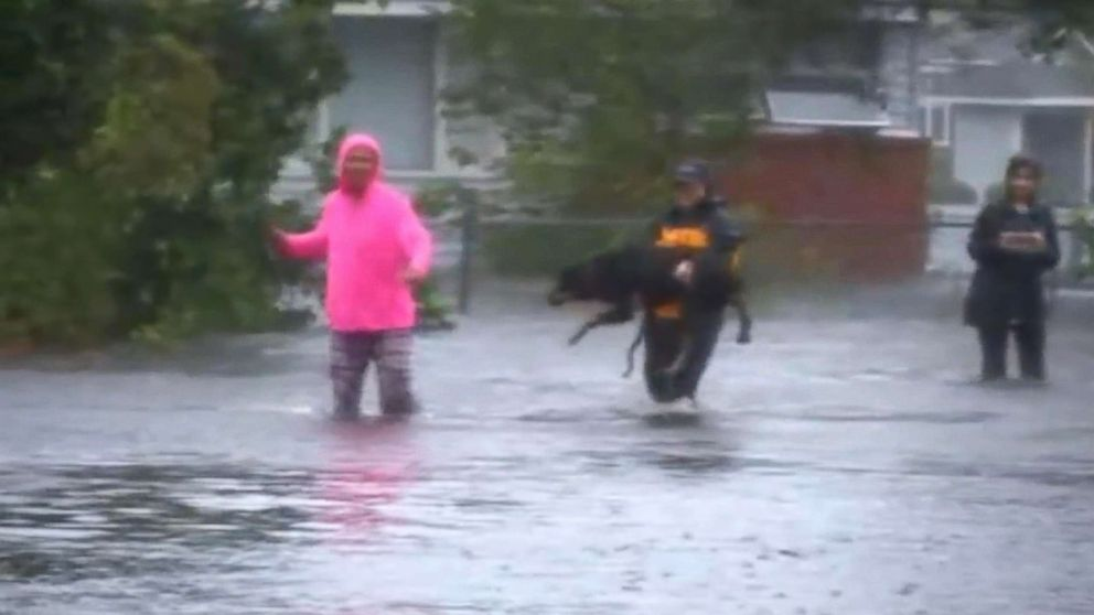 Julie Wilson, a reporter for WTVD, helps save a dog when Hurricane Florence hit New Bern, N.C., Sept. 14, 2018.