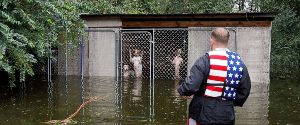 PHOTO: Panicked dogs that were left caged by an owner who fled rising flood waters in the aftermath of Hurricane Florence, are rescued by volunteer rescuer Ryan Nichols of Longview, Texas, in Leland, N.C., Sept. 16, 2018.