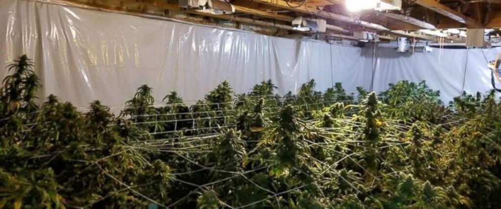 Sheriffs recovered over $1.2 million in marijuana from a grow house in Canton, Ga., on Friday, June 29, 2018.