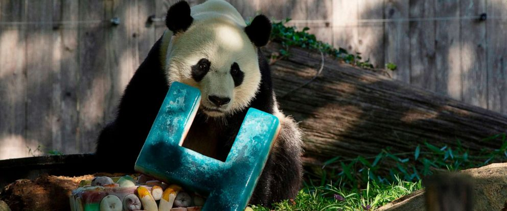 PHOTO: Giant panda Bei Bei is pictured with his frozen 4th birthday cake at the Smithsonian National Zoo in Washington, D.C., on Aug. 22, 2019.