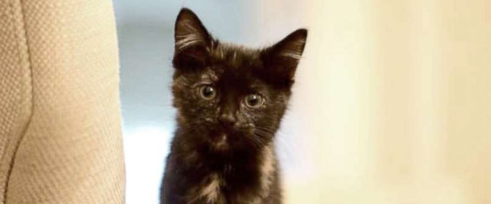 PHOTO: North Carolina Gov. Roy Cooper adopted a kitten found hiding on the Executive Mansions property over the weekend and named her Jenny.