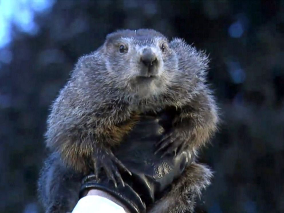 groundhog day 2018 punxsutawney phil sees shadow six more weeks of