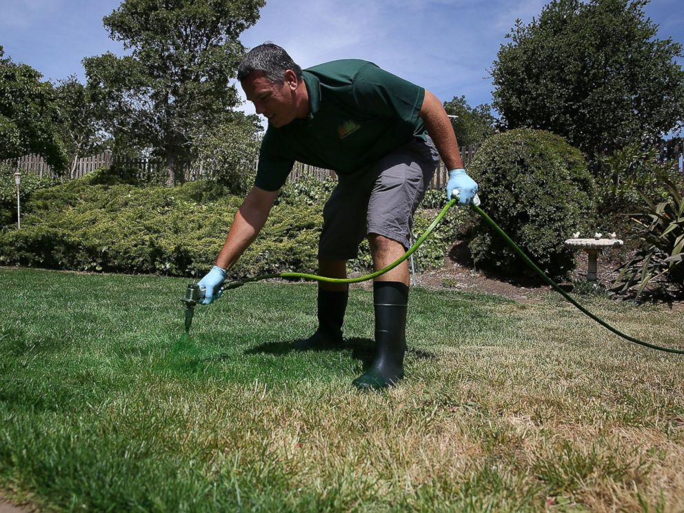 PHOTO: A man applies green paint to a brown lawn on May 29, 2015 in Novato, Calif.