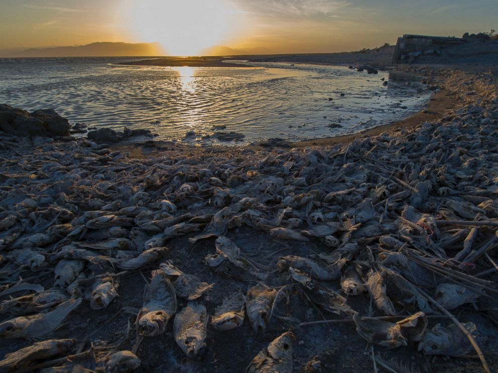 PHOTO: Dead fish are seen on the bank of Salton Sea, a saline lake in Southern California on April 29, 2016.