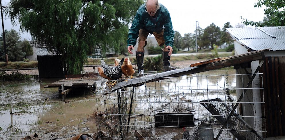 PHOTO: Jimmy Walker works to remove four chickens