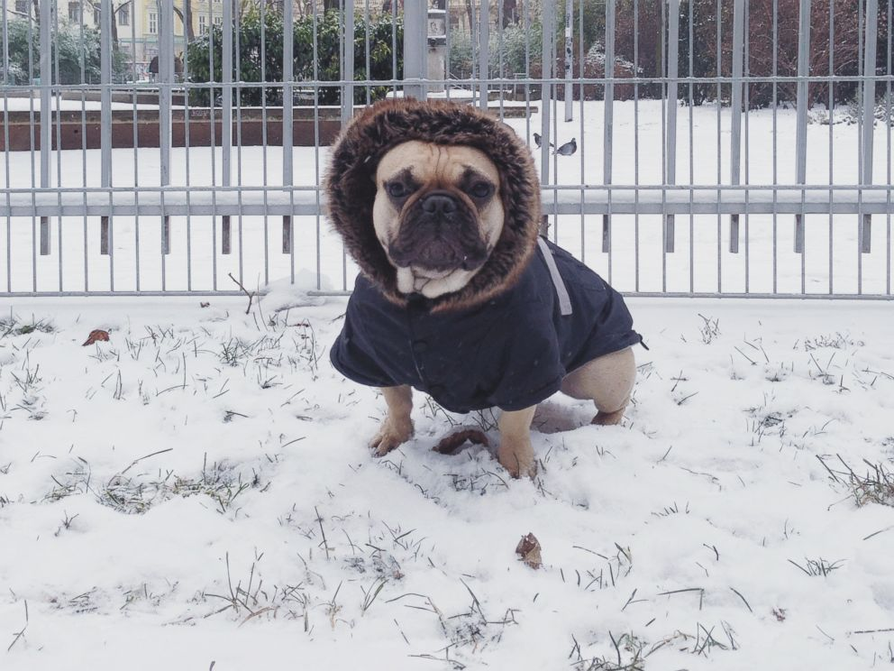 PHOTO: Remember to bring pets inside during a snow storm.
