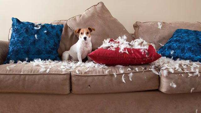 Ny Dog Owners Does Your Pooch Destroy Your Home Abc News