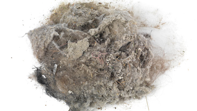 PHOTO: A pile of dust and hair.