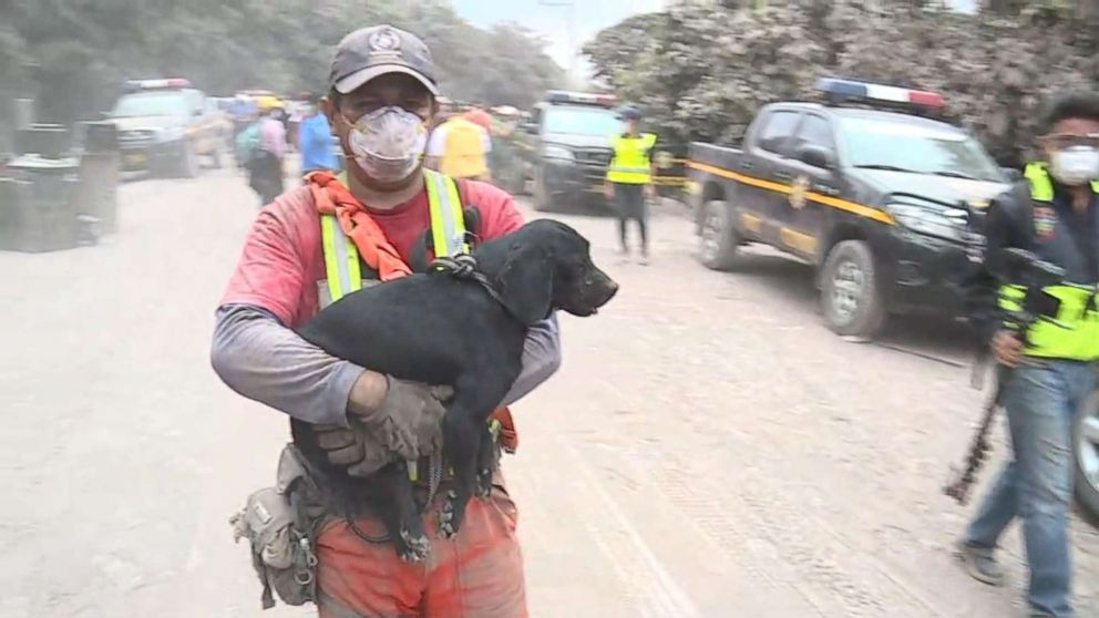 PHOTO: Workers rescue a puppy after the eruption of Volcan de Fuego in Guatemala on June 4, 2018.